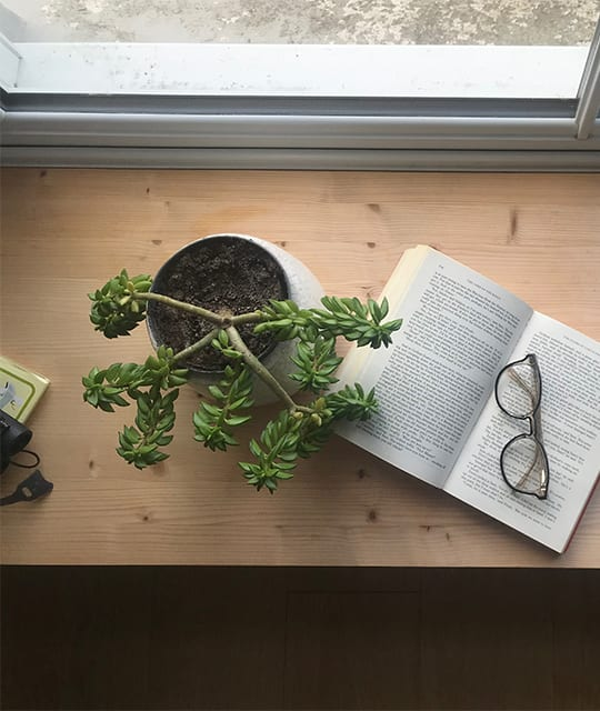 Book and reading glasses next to a succulent