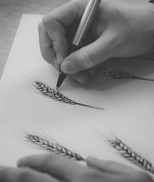 Ear of wheat illustration for Weetwood Distillery by Kingdom & Sparrow
