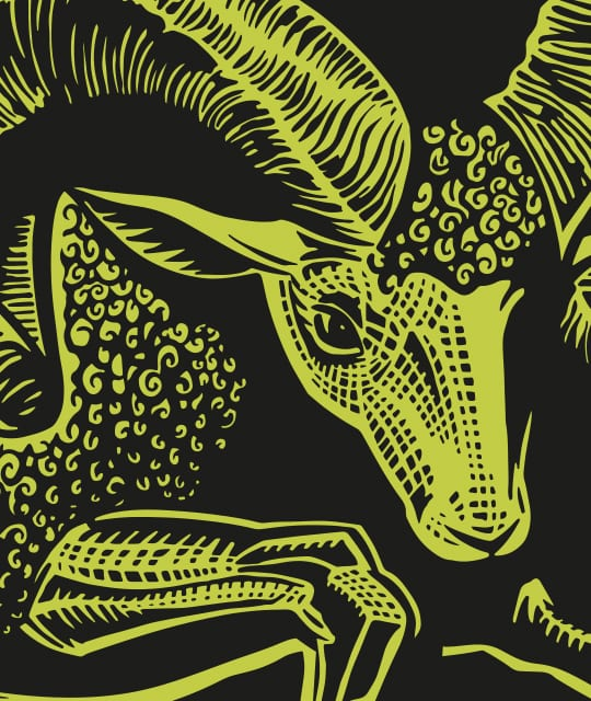 Young's Brewery Rebrand Kingdom & Sparrow Ram Illustration
